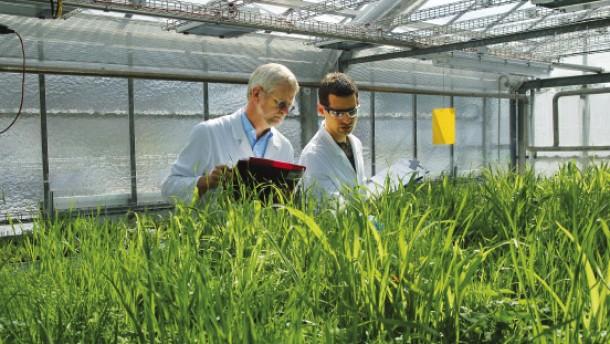 Bayer baut Stellen in Höchst ab