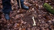 Menschliche Knochen in Garten gefunden
