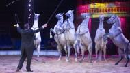 Stillgestanden: Tierdressuren sind die Spezialität des Circus Carl Busch. Nummern wie die mit den Pferdeformationen sind bis zum 4. Januar zu bestaunen.