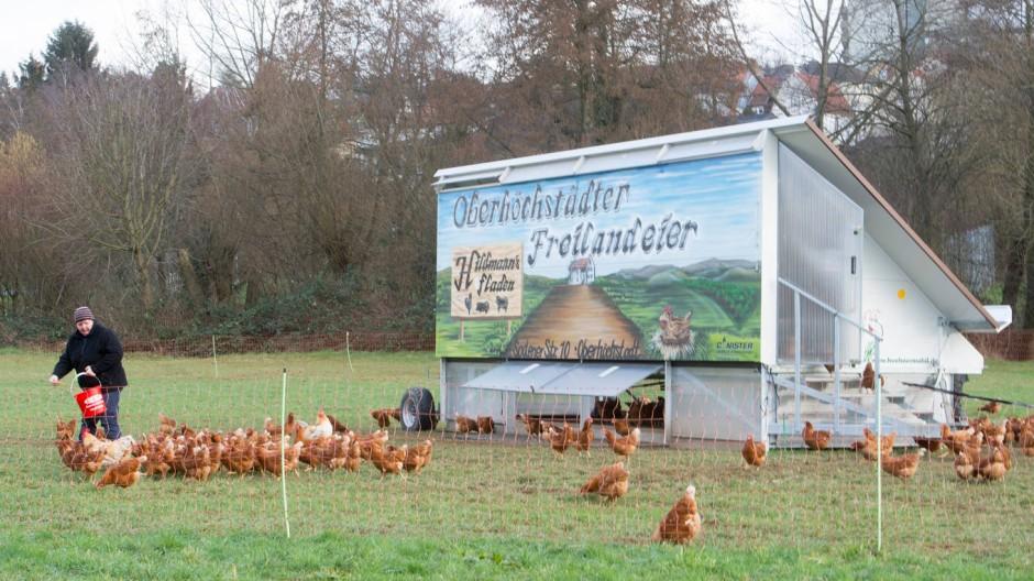 So beliebt wie zunächst kostenträchtig: Hühnermobil
