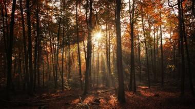 Lichtblick: In den rheinland-pfälzischen Mischwäldern wie hier bei Großkarlbach trotzen vor allem Buchen den extremen Wetterlagen.