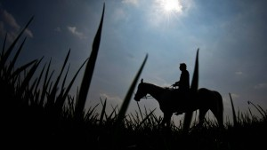 Pferdeschänder auf Wiesbadener Weiden