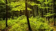 Hessen hat die meisten naturnahen Wälder
