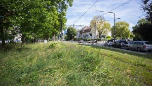 Blühende Wiesen statt Monokulturen