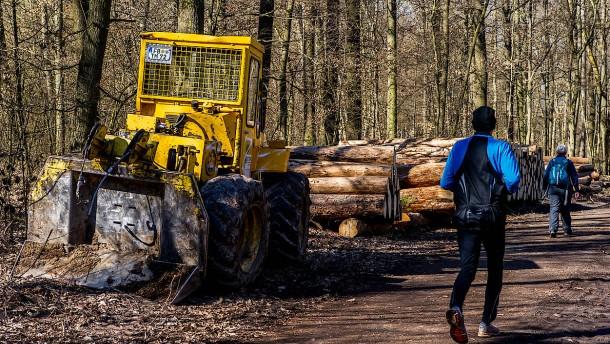 Wald wird Politikum