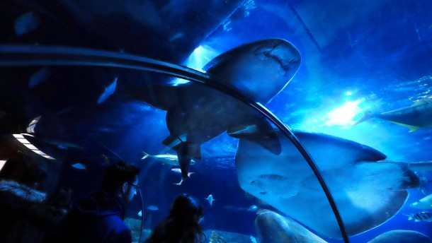"""""""Derzeit ergibt das Hai-Projekt keinen Sinn"""""""