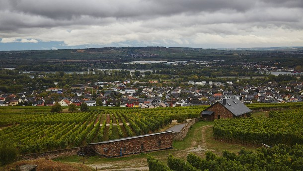 Beethoven hätte Wein aus dem Rheingau getrunken