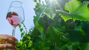Weinmarkt als Mutmacher
