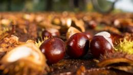 Die letzten Beeren zusammen mit den ersten Nüssen