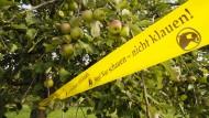 Aufruf: Obstdiebe lassen sich von Flatterbändern leider nicht abhalten