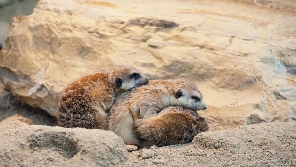 Kälteeinbruch - Trauen sich bei diesen Temperaturen viele Menschen in den Zoo?