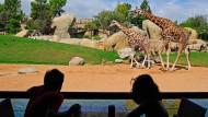 Nashorn, Strauß und Zebra in einem Gehege