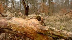 Aufforsten soll unter Wassermangel leidenden Wald helfen