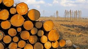 Wo ist das ganze Holz geblieben?