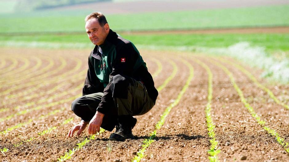 Auf dem eigenen Boden bleiben: Bauer Michael Schneller auf seinem Zuckerrübenfeld.