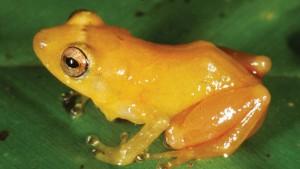 Senckenberg-Forscher entdecken 329 Arten