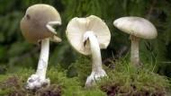 Pilze sammeln: In der Welt der Nichtpflanzen