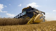 Abfuhr: Vielerorts in Hessen haben Bauern wesentlich weniger Weizen vom Acker geholt als in halbwegs normalen Jahren