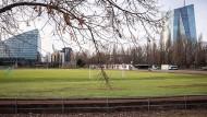 Eine Option: Um die Europäische Schule neu zu bauen, könnte die Sportanlage Mainwasen verlagert werden.