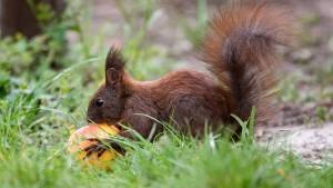 Im Eichhörnchenstil