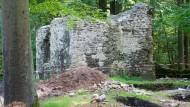 Suchgebiet: Die Klosterruine birgt manche Überraschung – Skelettreste zum Beispiel.