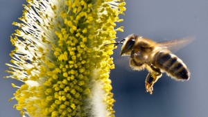 Reichlich Honig dank früher Blüte