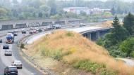 Noch eine Brache: Die zukünftige Abfahrtsrampe an der Ostumgehung der A 661 ist überwuchert.
