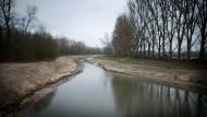 Noch nicht wie früher: Entlang des renaturierten Altrheinarms soll sich nach und nach die auentypische Vegetation bilden.