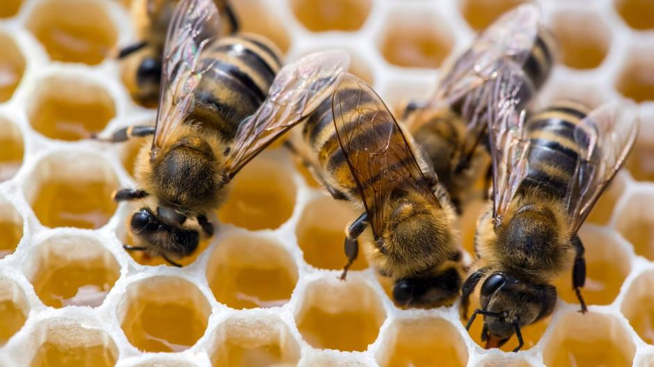 Weniger Summen: Pflanzenschutzmittel beeinflusst das Verhalten von Bienen.