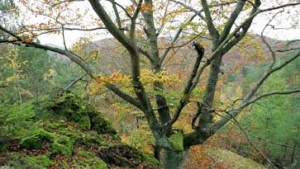 Schwere Zeiten für Hessens Wald
