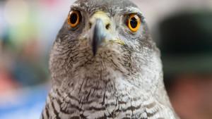 Hessen hat seinen sechsten Fall von Vogelgrippe