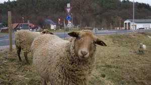 Zwei Fälle von Q-Fieber in Mittelhessen