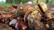 Ein fettes Jahr für den Stadtwald