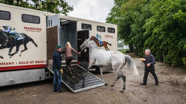Auf Achse - wenn Rennpferde reisen
