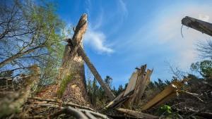 Waldbrandgefahr nach Niederschlägen etwas gemildert
