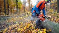 Zwei Millionen Bäume verjüngen den Wald