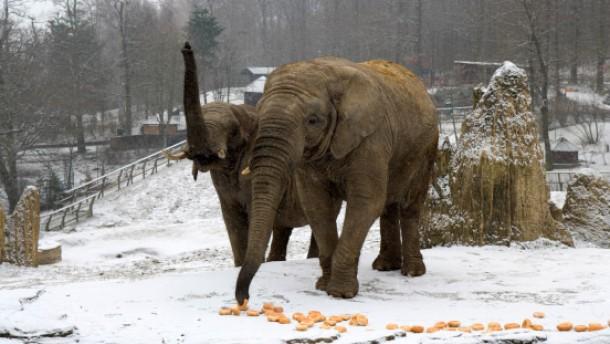 Neues Haus für Hessens einzige Elefanten