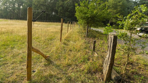 Mehrere Schafe in Osthessen von Wolf gerissen
