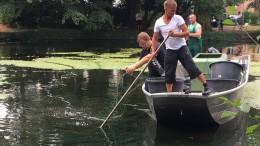 Kleiner Wels darf in Offenbacher Teich bleiben - zumindest vorerst