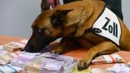 Geld stinkt nicht: Aber dieser Bargeldschnüffelhund vom Frankfurter Flughafen kann es zumindest erschnuppern und finden.