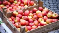 Garantiert aus der Region: Äpfel aus Kronberg auf dem Offenbacher Wochenmarkt