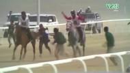 Pferdehölle in der Wüste