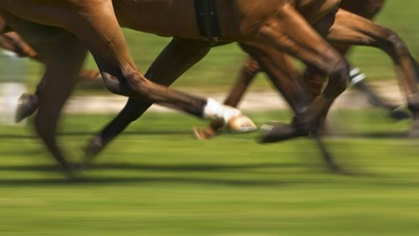 Tummelplatz der Pferdeschinder