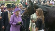 Rennpferd der Queen beim Dopingtest durchgefallen