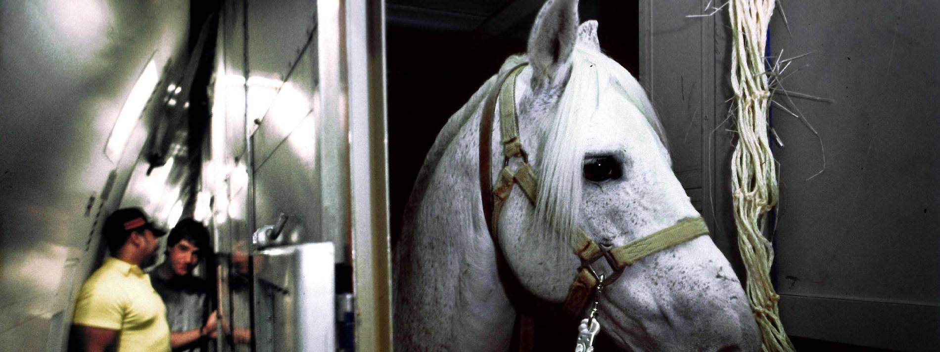 Die Angst vor einer Pferde-Pandemie