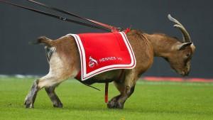 Bock auf Chaos beim 1. FC Köln
