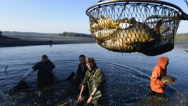 Die EU hat neue Quoten für den Fischfang festgelegt