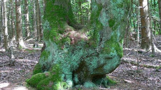 Bizarre Bäume, beste Aussichten