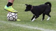 Einen Hund mit aufs Spielfeld zu bringen, ist nicht ohne Gefahr