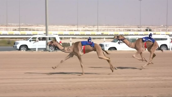 Neymar gewinnt Kamelrennen